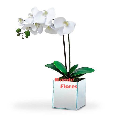 4310 Orquídea Branca no Cachepo.