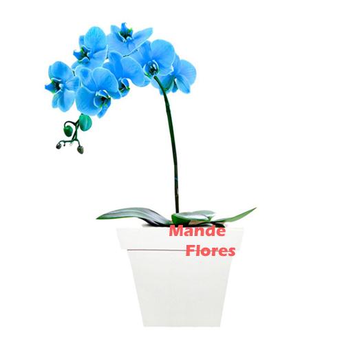 4312 Orquídea Com Uma Haste.