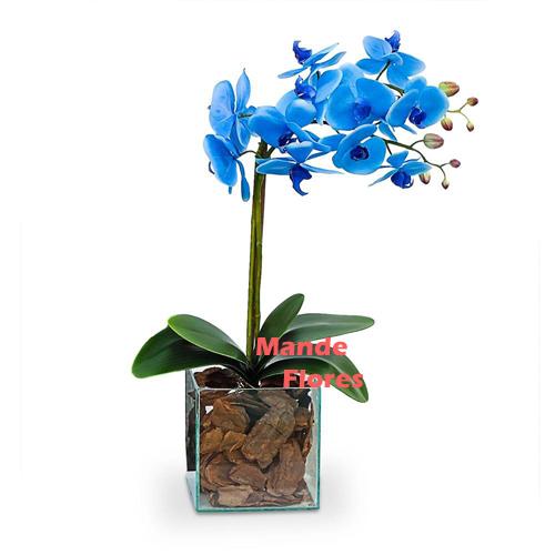 4314 Orquídea Phalaenópsis.