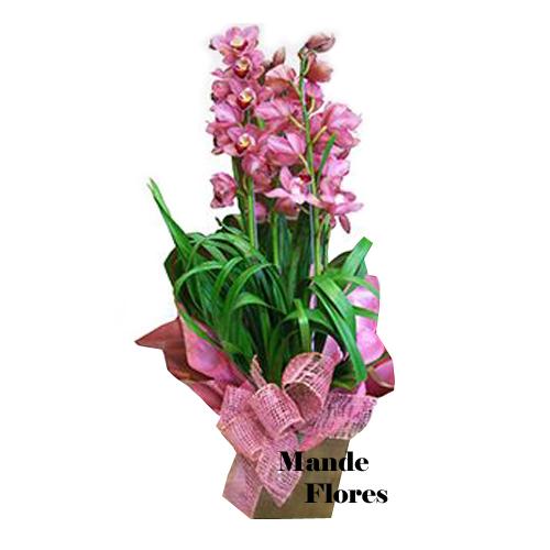 4978 Orquídea Simbidio