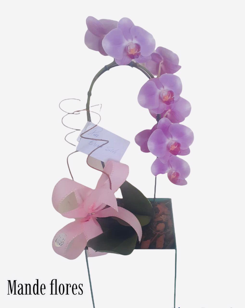 5520 Orquidea Cascata Lilas